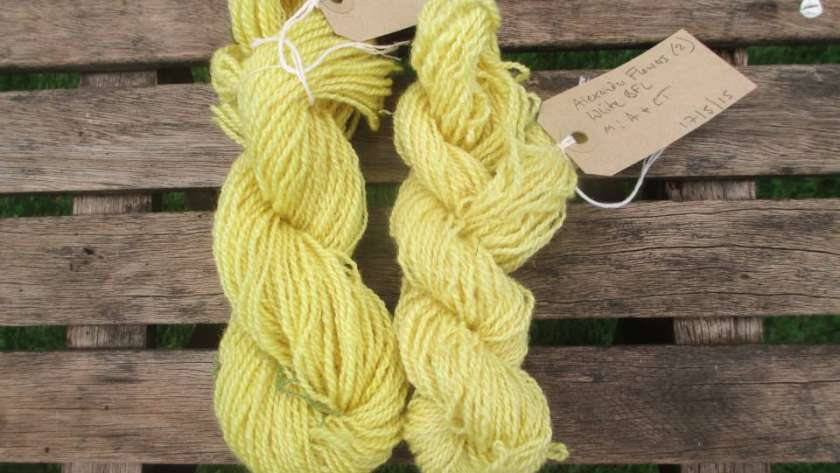 Skeins of handspun BFL dyed with Alexanders