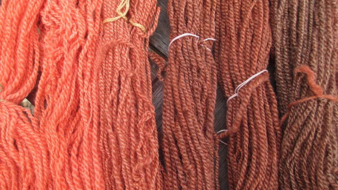 Skeins of handspun Bluefaced Leicester from solar dye pot 1