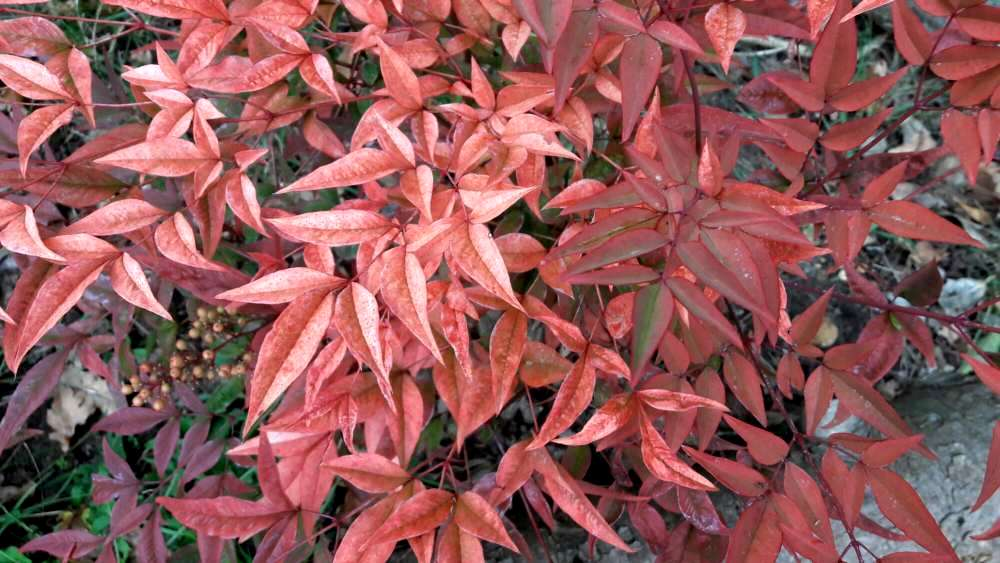 Autumn leaves - pinks to reds